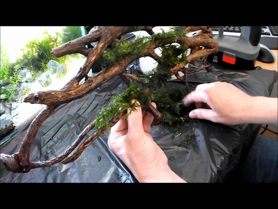 Diy Aquarium Moss Wall Using Wood Youtube