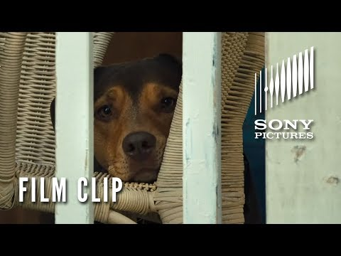 "A DOG'S WAY HOME Clip - ""Go Home"" (Now Playing)"