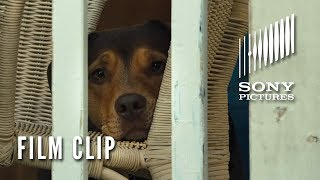 A DOG'S WAY HOME Clip -