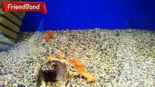 УДИВИТЕЛЬНЫЙ аквариум! Видео для детей.