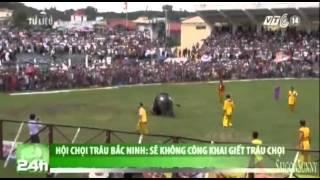 VTC14_Hội chọi trâu Bắc Ninh: Sẽ không công khai giết trâu chọi