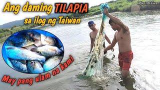 Buhay Ofw: NANGHULI KAMI NG PANG ULAM NAMIN TILAPIA/BANAK/BANGUS SA ILOG NG TAIWAN by: bulay og tv