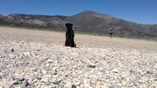 Labrador Retriever Training On Your Own | Sit Means Sit
