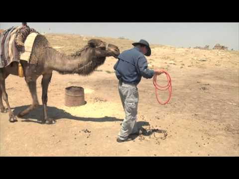 Biting Camel and Mess