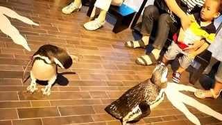 すみだ水族館での目の前でのペンギンさんとの触れ合い♪ ペンギンさんの「お~」と言う会話も面白い☆自分の名前も認識しているらしい(喜笑...