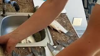 Рыбалка Волга Астрахань база Фора Фиш