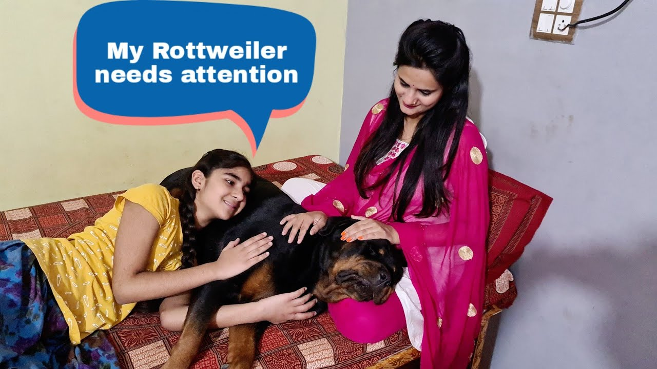 My dog is fighting for Omelette  funny dog videos  rottweiler.