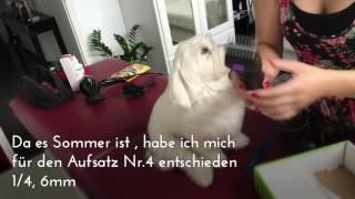 Grooming a Maltese Dog | Malteser trimmen, schneiden | namens Lui