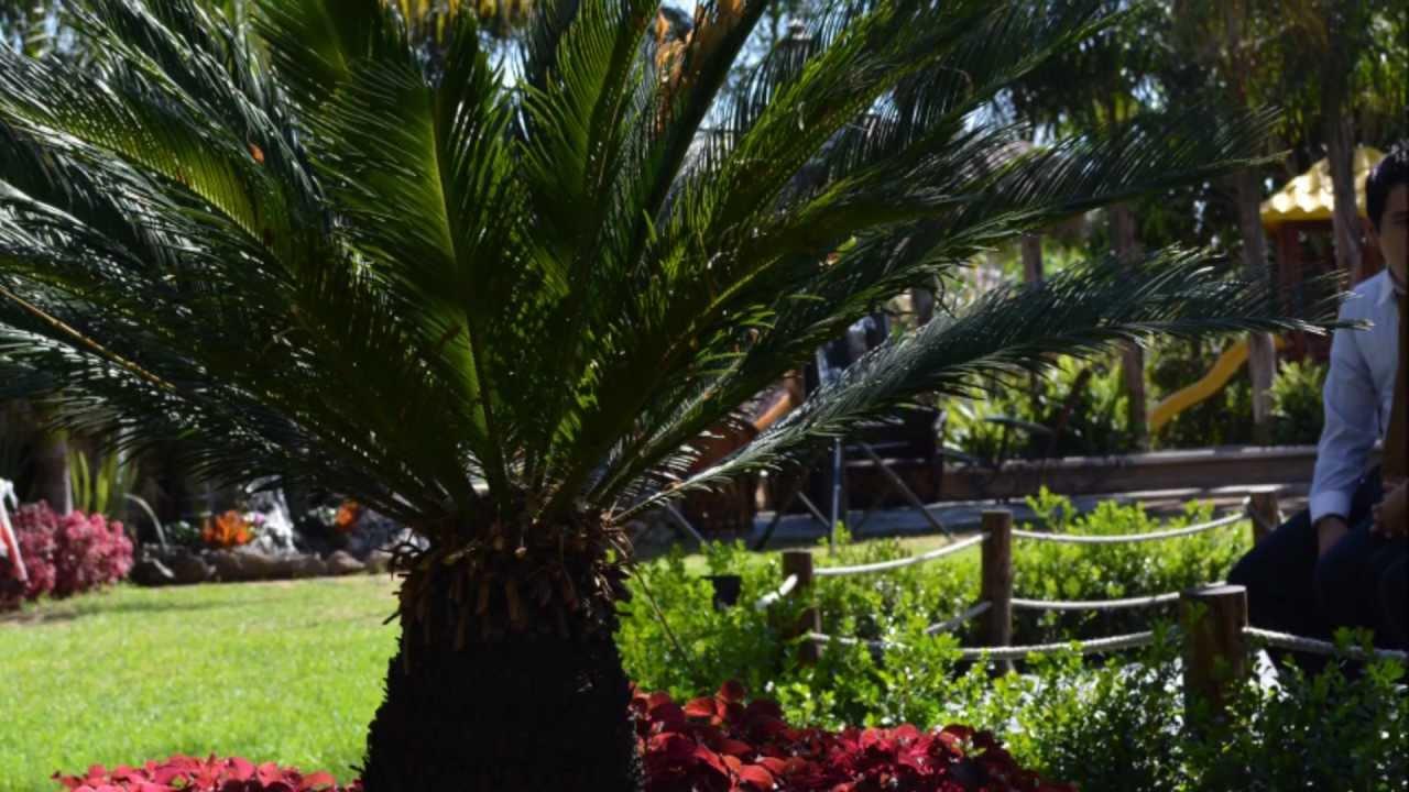 Jard n getsemani pm producciones youtube for Ideas para embellecer el jardin