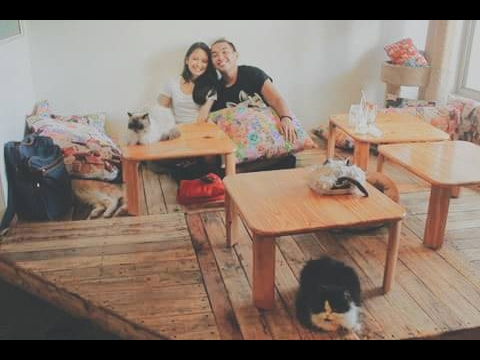 ♥♥MIAO CAT CAFE♥♥ (2015)