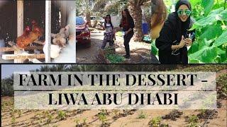 Farm in the Desert - Liwa (Abu Dhabi Vlog 102)