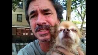 Dog Only Goes Twice Day, Your A Rotten Owner........peter Caine Dog Training