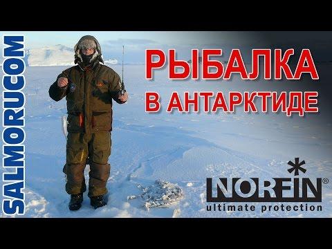 Вопрос: Как рыбы выживают в водах Антарктики?
