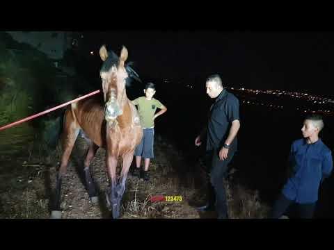 حصان قام صاحبه برميه بحالة حرجة مع جمال العمواسي
