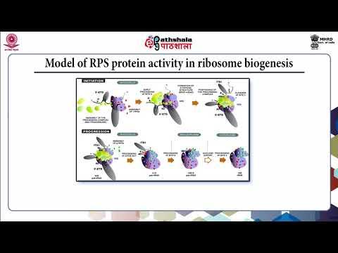 rRNA Processing