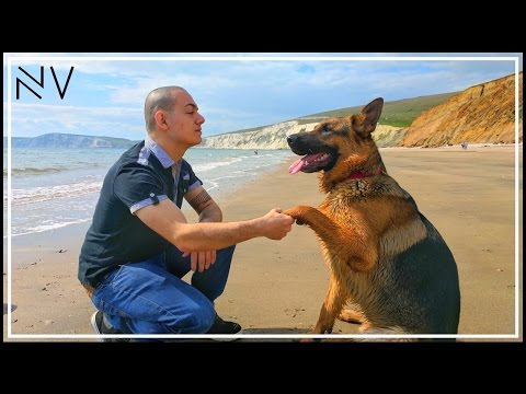 Funny Dog At The Beach In 4K!