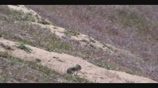 Whistle Pig Boise 5-9-09