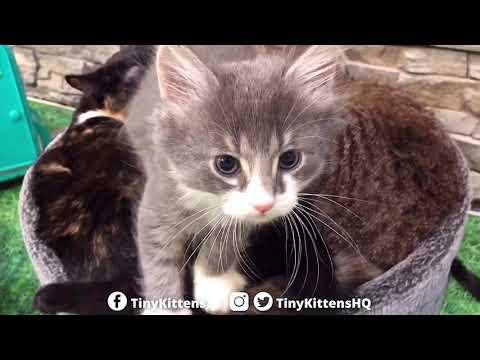 "Grandpa Mason And The Auracuda In ""The Kitten Wash"" - TinyKittens.com"