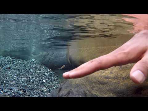 Free fish massage at Wadi Ghul - Oman