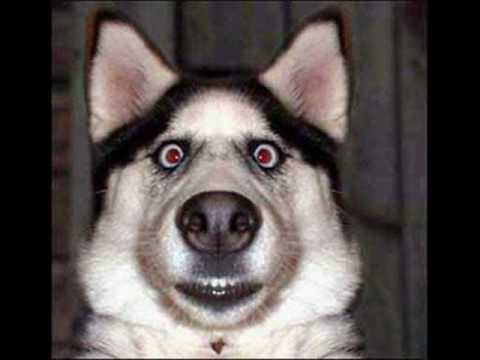 Funny Dogs Without Words Try To Watch This With...