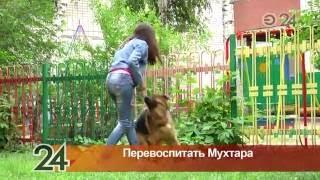 Овчарка, подаренная казанской девочке Президентом России, держит в страхе всю многоэтажку