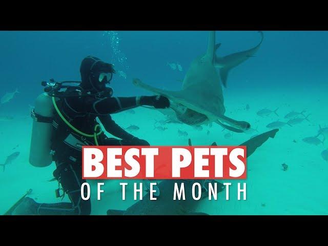 Best Pets of the Week | June 2018 Week 4