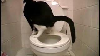 Кошка ходит в туалет как человек!