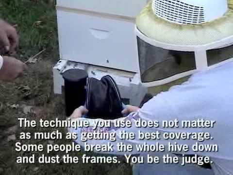 Sugar dusting a bee hive for mite control youtube sugar dusting a bee hive for mite control sciox Choice Image