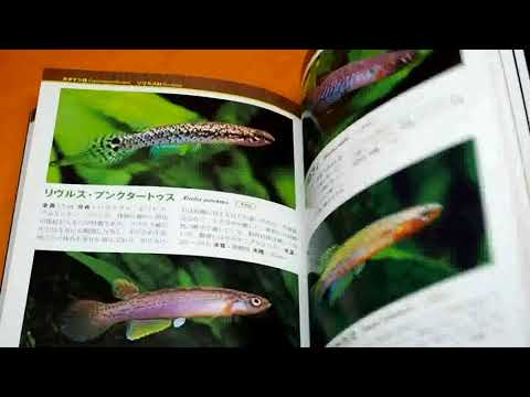 MEDAKA & KILLIFISH & LIVEBEARERS Guide Book From Japan Japanese Rice Fish #1040