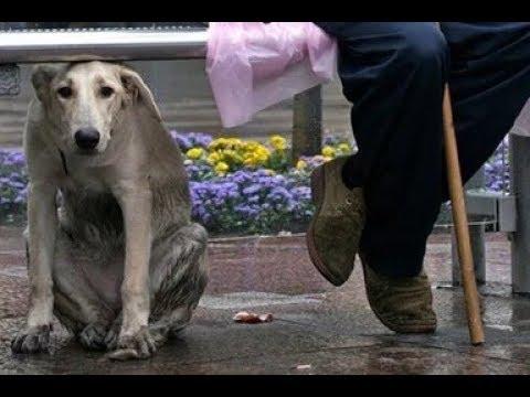 Вопрос: Почему за некоторыми людьми увязываются собаки?