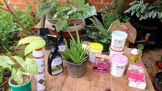12 Produtos Para Deixar Suas Plantas Cheias De Flores