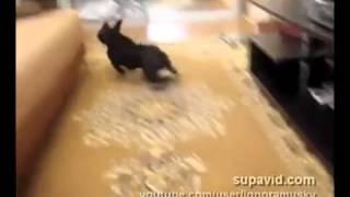 Очень быстрая собака