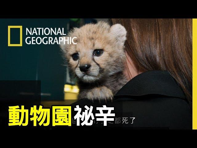 這個動物園裡拉不拉多跟獵豹是好朋友,紅鶴會幫動物照護員整理頭髮!!【動物園祕辛】短片精華版