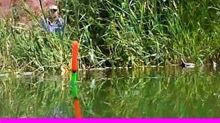Поклевка, вид на поплавок по иному. Рыбалка. Ловля карася, уклейки на поплавочную удочку. поплавок(Поклевка, вид на поплавок с другой стороны. .….((Мой канал- это (в основном) канал ЛЮБИТЕЛЯ-рыболова или рыбал..., 2015-06-13T13:16:04.000Z)