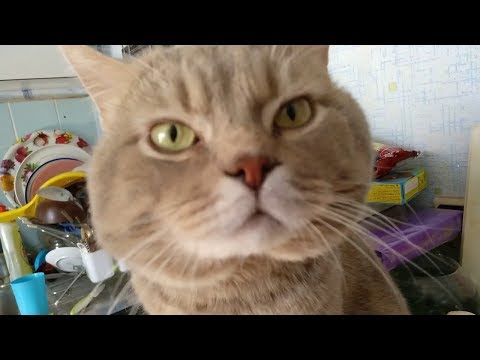Кот говорит Я тебя ЛЮБЛЮ. Самое милое видео!