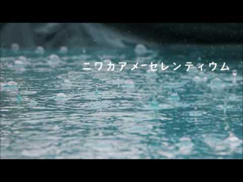 ニワカアメ (Niwaka Ame/소나기) cover