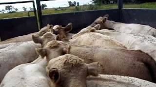 My Portable Cattle Processing Pens