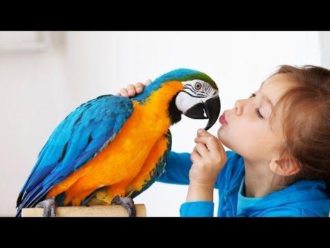 Best Birds for a Beginner | Pet Bird