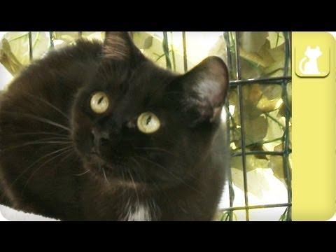 Black cat ignored, thought of as bad luck - Unadoptables