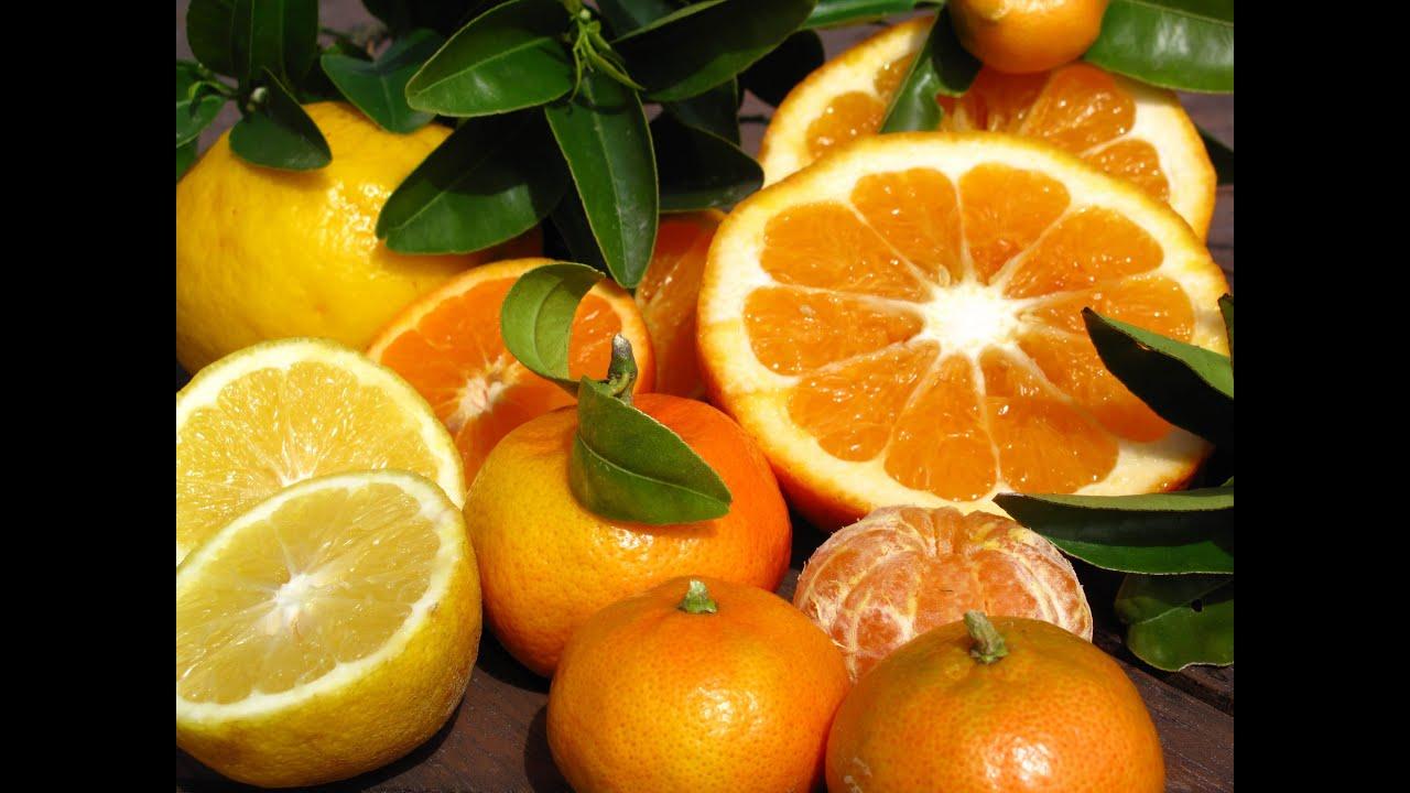 Growing Citrus Trees Lemonade Tangelo Blood Orange