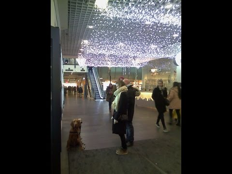 Smart Dogs: Training in shopping center
