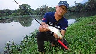 Casting Ikan Bulan (Kenali Japan style Tenkara fishing in Malaysia part 1)