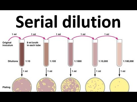 Serial Dilution   YouTube