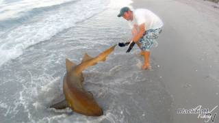 Nurse Shark from the Surf