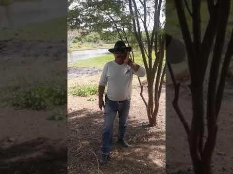 Alinne do Vaqueiro o vaqueiro mais apaixonado Alô cidade de Feira Nova dia 2 de Fevereiro a gente tá