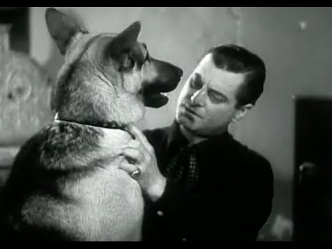 The Silver Trail (1937) - B-Western Movie with Rin Tin Tin Jr.