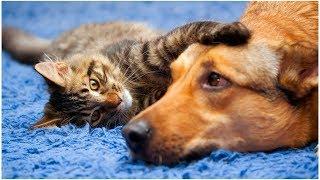 Vídeos engraçados para animais de estimação 2019 ♥ Cães e gatos fofos fazendo coisas engraçadas P24