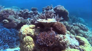 Чудесный подводный мир океана! Красивый док фильм 1