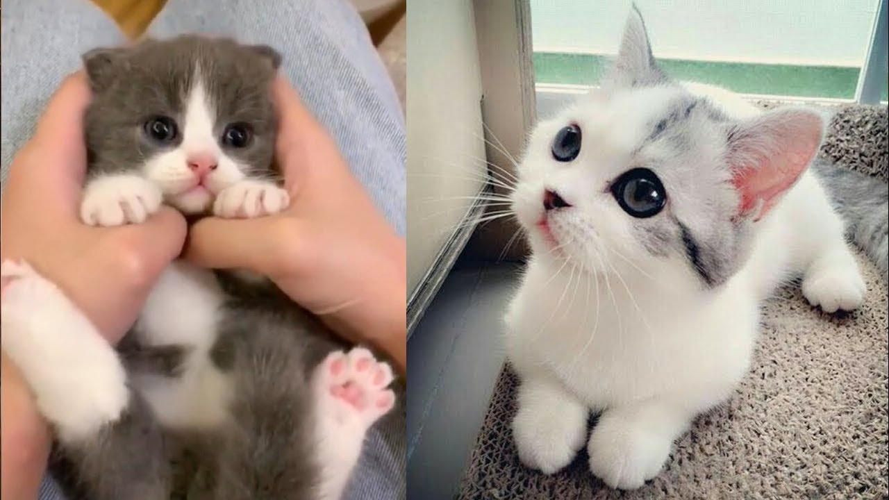 😂 Too Funny Too Cute 🐱 The Funniest and Cure Cats - Funny Animals Compilation 2020