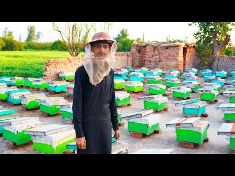 Honeybee Farming | Honey Making Process | Visit To Honey Farm | Zaheer Hassan Vlogs